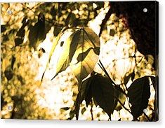Leaf Space Two Acrylic Print by Jeremy Ashburn
