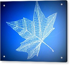 Leaf Study 3 Acrylic Print by Cathy Jacobs