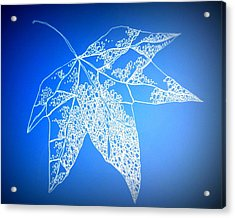 Leaf Study 4 Acrylic Print by Cathy Jacobs