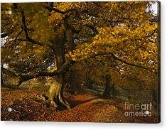 Leafy Lane Acrylic Print by Anne Gilbert