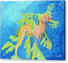 Leafy Seadragon Acrylic Print by Tanya Hamell