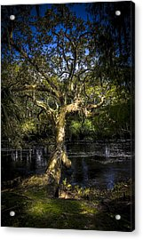 Leaning Oak Acrylic Print by Marvin Spates