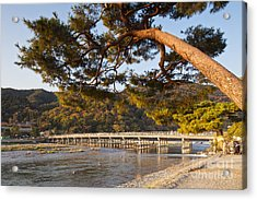 Leaning Pine Tree Arashiyama Kyoto Japan Acrylic Print by Colin and Linda McKie
