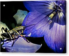 Contemplation Of A Pistil Acrylic Print by Karen Wiles