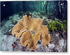 Leather Coral Acrylic Print by Ethan Daniels