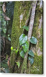 Leaves And Moss In Rainforest Acrylic Print by Wendy Townrow