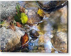 Leaves And Needles Acrylic Print by Sharon Talson