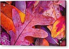 Leaves Acrylic Print by Anne-Elizabeth Whiteway