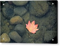 Leaves Are Falling Acrylic Print by Rachel Cash