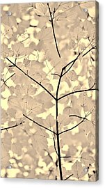 Leaves Fade To Beige Melody Acrylic Print by Jennie Marie Schell