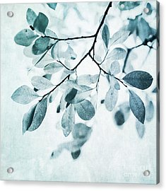 Leaves In Dusty Blue Acrylic Print by Priska Wettstein