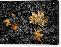 Leaves On Forest Floor Acrylic Print by Tom Mc Nemar