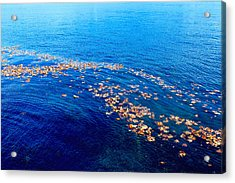 Leaves On The Ocean Acrylic Print by Sharon Talson
