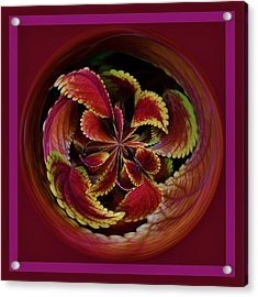 Leaves With Border Orb Acrylic Print by Paulette Thomas