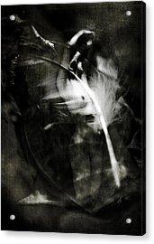 Leda And The Swan Acrylic Print by Rebecca Sherman