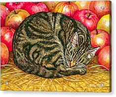 Left Hand Apple Cat Acrylic Print by Ditz