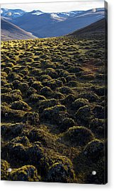 Lemmings Acrylic Print by Aaron S Bedell