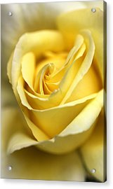 Lemon Lush Acrylic Print by Joy Watson