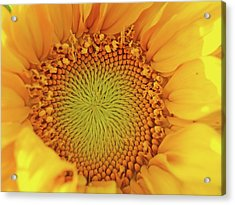 Lemon Acrylic Print by Tom Druin