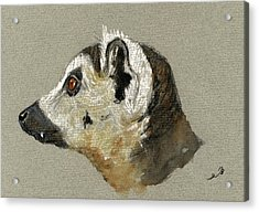 Lemur Head Study Acrylic Print by Juan  Bosco