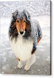 Leo In The Snow Acrylic Print by Sandra Chase