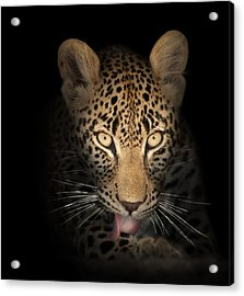 Leopard In The Dark Acrylic Print by Johan Swanepoel