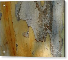 Leopard Tree Bark Abstract No.3 Acrylic Print by Denise Clark