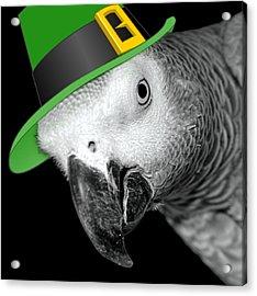 Leprechaun Parrot Acrylic Print by Mim White