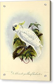 Lesser Cockatoo Acrylic Print by J G Keulemans