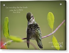 Let Everything That Has Breath Praise The Lord Acrylic Print by Cris Hayes