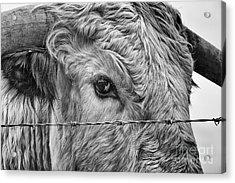 Let Me Go Free Acrylic Print by John Farnan