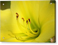 Let Us Open Our Leaves Like A Flower And Be Passive And Receptive Acrylic Print by Shweta Singh