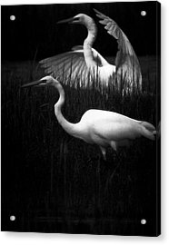 Let's Just Wing It Acrylic Print by Robert McCubbin