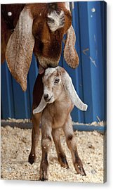 Licked Clean Acrylic Print by Caitlyn  Grasso