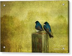 Life Long Friends Acrylic Print by Beve Brown-Clark Photography
