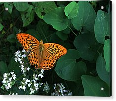 Life Acrylic Print by Lucy D