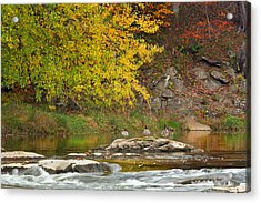 Life On The River Acrylic Print by Bill Wakeley