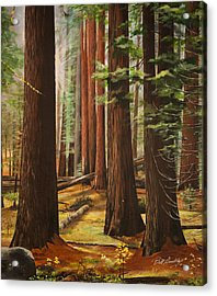 Light In The Forest Acrylic Print by Bill Dunkley