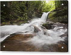 Light In The Forest Acrylic Print by Debra and Dave Vanderlaan
