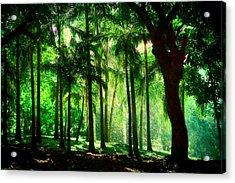 Light In The Jungles. Viridian Greens. Mauritius Acrylic Print by Jenny Rainbow