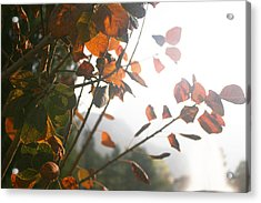 Light Acrylic Print by Lucy D