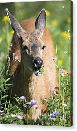 Aster Acrylic Print featuring the photograph Light Lunch by Mike Dawson