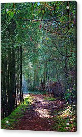 Light The Way Acrylic Print by Bruce Bley