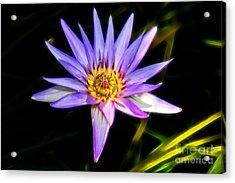 Lilac Lily Acrylic Print by Mariola Bitner