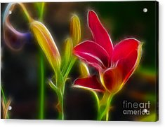 Lilies-6340-fractal Acrylic Print by Gary Gingrich Galleries