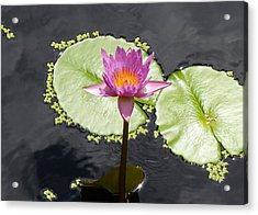 Lilly Lake Acrylic Print by Carey Chen