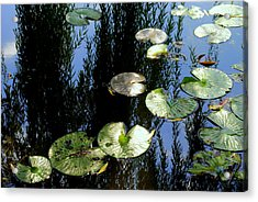 Lilly Pad Reflection Acrylic Print by Frozen in Time Fine Art Photography