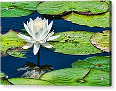 Lilly White Acrylic Print by Frank Feliciano