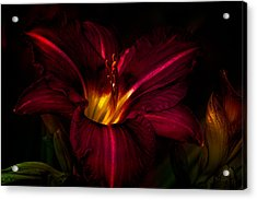 Lily Number Nine Acrylic Print by Bob Orsillo