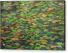 Lily Pads Acrylic Print by Tom York Images